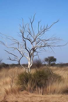 Mystic Buishveld Tree by Dave Harcourt