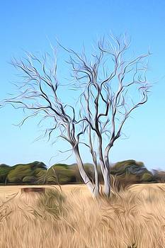 Mystic Buishveld Trees - 3 by Dave Harcourt
