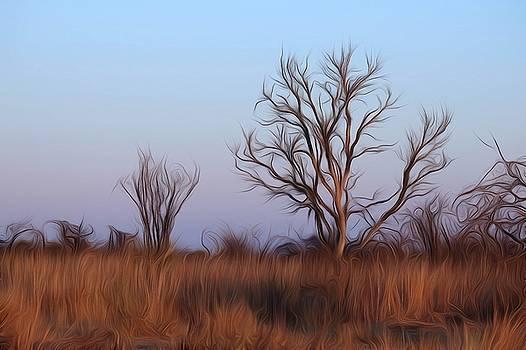 Mystic Bushveld Trees - 2 by Dave Harcourt