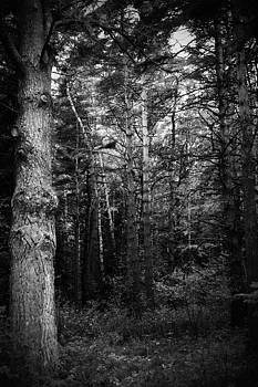 Mystic forest by Roman Aj
