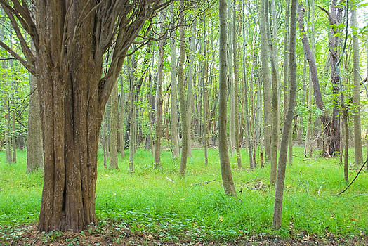 Mystical Forest by Andrew Kazmierski