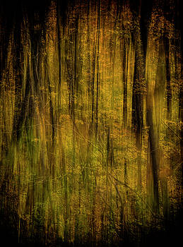 Mystical Forest Autumn Abstract by Skyelyte Photography by Linda Rasch