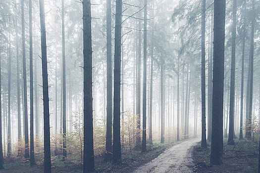 Mystical Forest by Emma Lucas