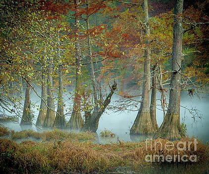 Mystical Mist by Iris Greenwell