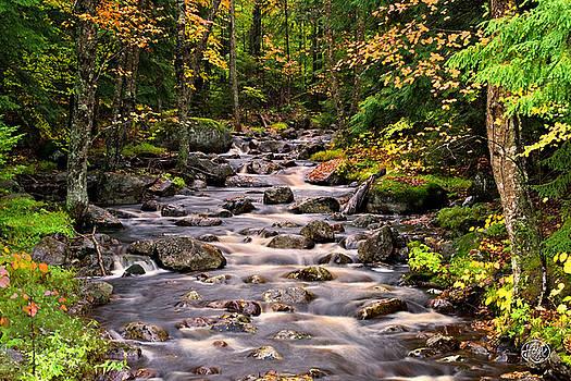 Mystical Mountain Stream by Brad Hoyt