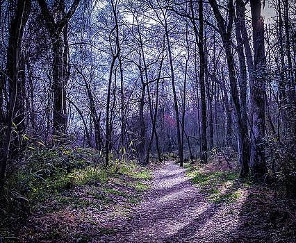 Mystical Trail by Ant Pruitt