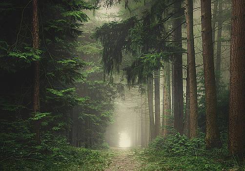 Mystique pines by Rob Visser