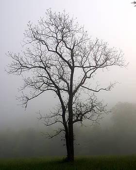 Marty Koch - Mysty Tree 3