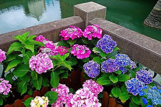Robert Meyers-Lussier - Nagasaki Floral Study 4