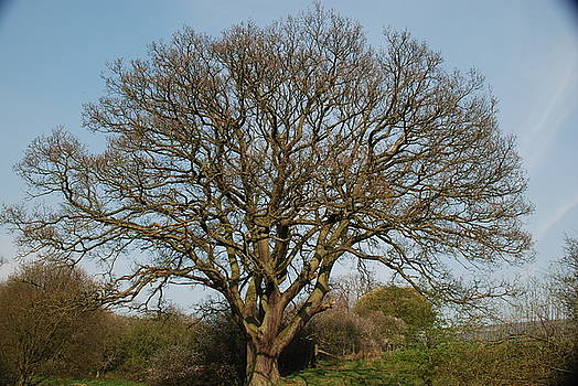 Doug Thwaites - Naked Tree