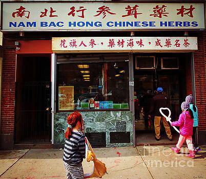 Nam Bac Hong Chinese Herbs, Chinatown, Boston, Massachusetts by Lita Kelley