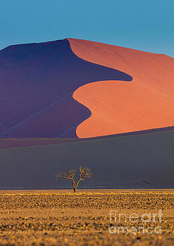 Inge Johnsson - Namib Dune