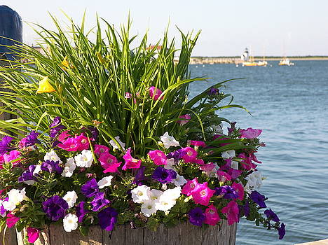 Nantucket Wharf Flowers by Mark Siciliano