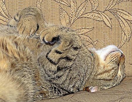 Nap Time Again by Susan Leggett