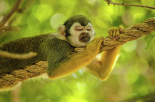 Nap Time by Emily Bristor
