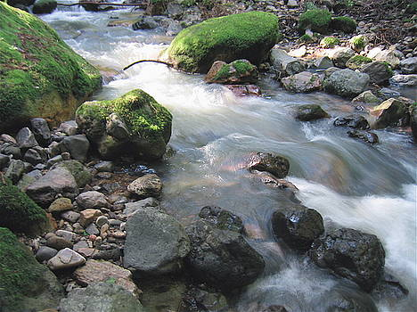 Napa Stream Bed by K Hoover