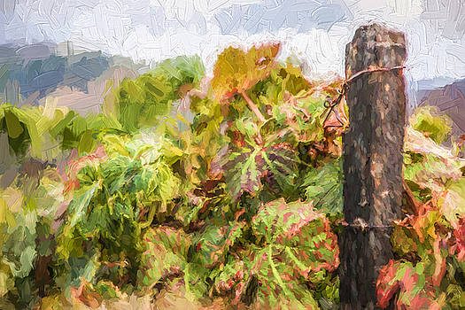 David Letts - Napa Vineyard