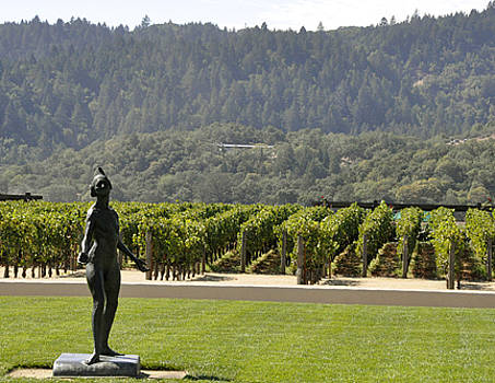 Napa Vineyards by Jennifer Ferrier