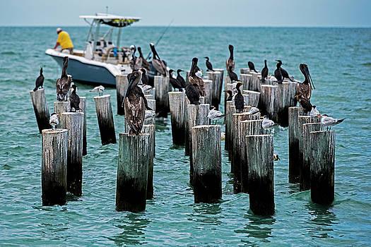 Toby McGuire - Naples Beach Pilons Gathering of the Birds Naple FL