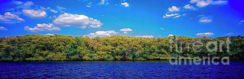 Naples Ft Myers Inland Wtr Ways Mangroves 30241008 by Tom Jelen