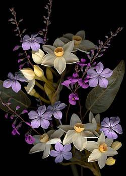 Marsha Tudor - Narcissus Group
