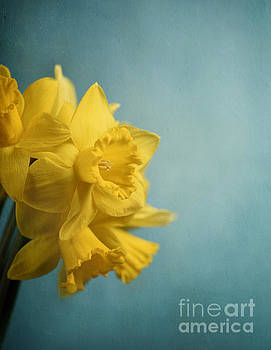 Narcissus by Jelena Jovanovic