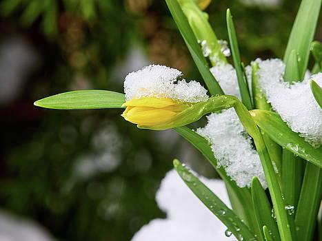 Narcissus. Show the way by Jouko Lehto