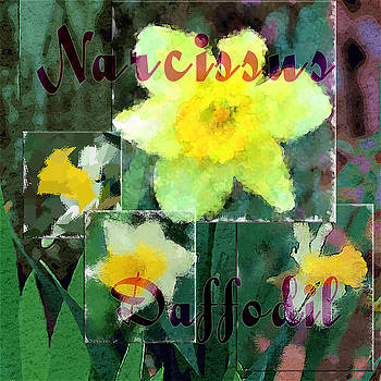 Margie Middleton - Narcissus