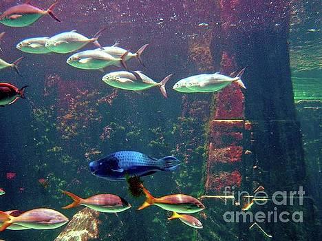Gary Wonning - Nassau Aquarium