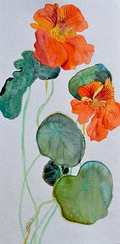 Nasturtiums Study Two by Beverley Harper Tinsley