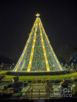 National Christmas Tree #1 by Sandy Molinaro