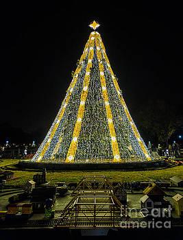 National Christmas Tree #2 by Sandy Molinaro