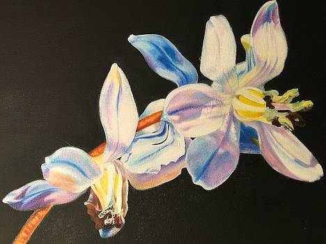 Natural Beauties by Deborah Plath