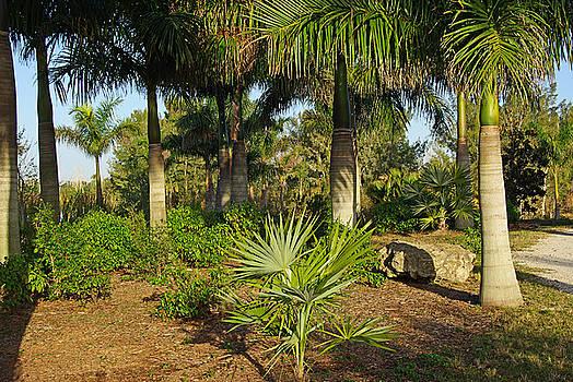 Natural beauty of Florida by Zalman Latzkovich