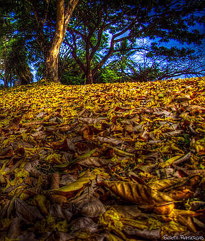 Natural Carpet by Sarita Rampersad