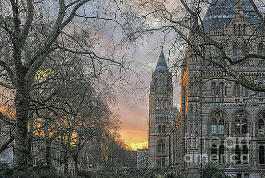 Natural History Museum in London by Patricia Hofmeester