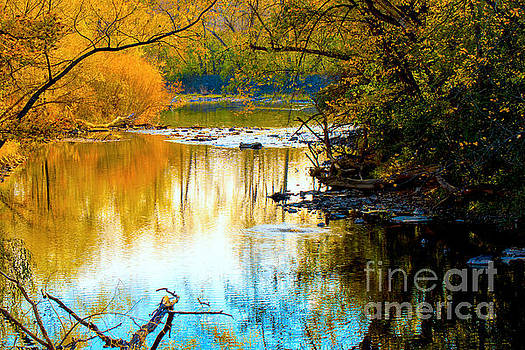 Natural Reflections by Debbie Nobile