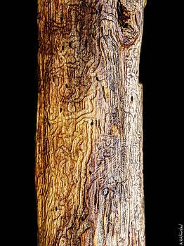 Weston Westmoreland - Natural Runes Triptych II