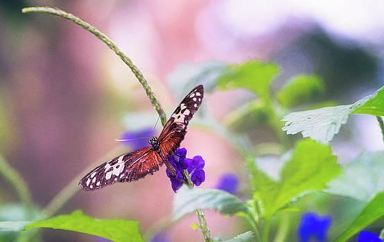 Garvin Hunter - Natural Wonders