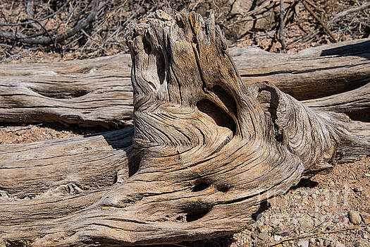 Bob Phillips - Natural Wood Designs