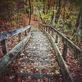 A Long Leaf Strewn Stairway  by Phunny Phace