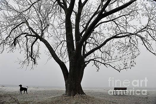 Nature and Dog at Rest by Randi Grace Nilsberg