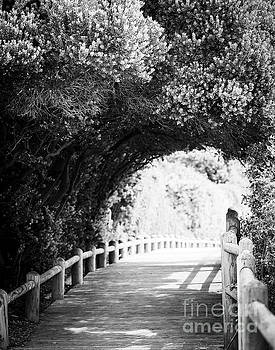 Tim Hester - Nature Boardwalk Black and White