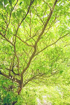 Nature Branching Out by Debi Bishop