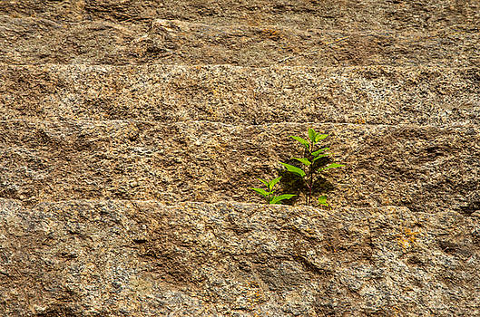 Karol Livote - Nature Grows
