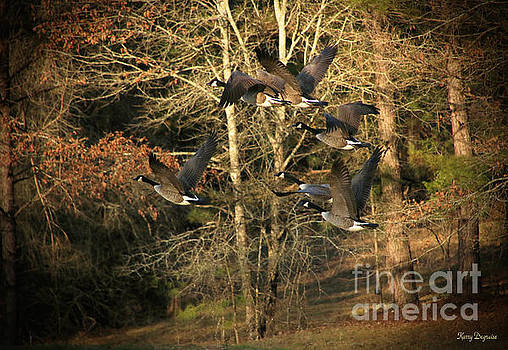 Nature In Flight by Karry Degruise