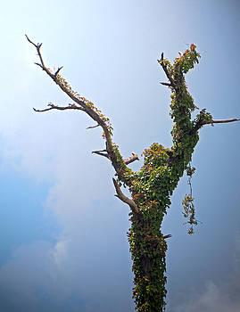 Nature In Praise by Richard Nickson
