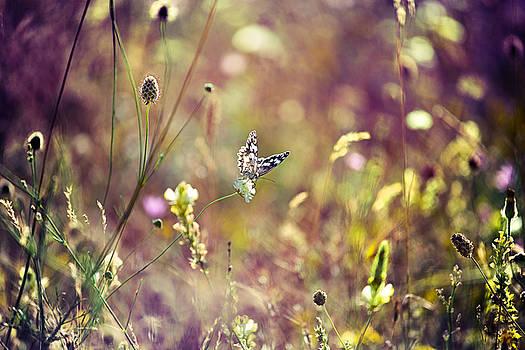 Nature by Ivan Vukelic