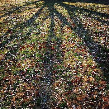 #nature #oldleaf #shadow #treeshadow by Bow Sanpo