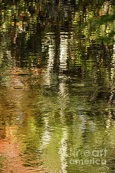 Nature Reflects by John Greco